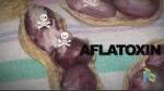 biosensor-aflatoxin-membawa-tim-itb-meraih-medali-perak-di-kompetisi-tingkat-dunia