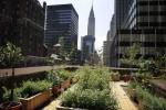 urban-farming-belum-jawab-ketahanan-pangan
