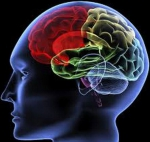 brain-computing-brain-waves-application-in-biomedical-engineering